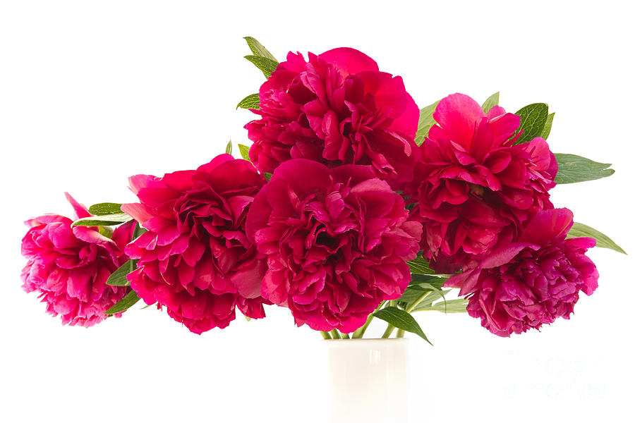Check The Birth Flowers For The Last 5 Zodiac Signs and Surprise People With A Floral Gift