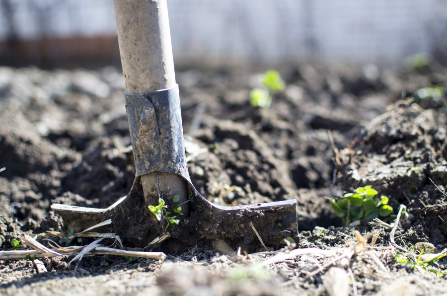 How To Start Your Garden When Budget Is Tight