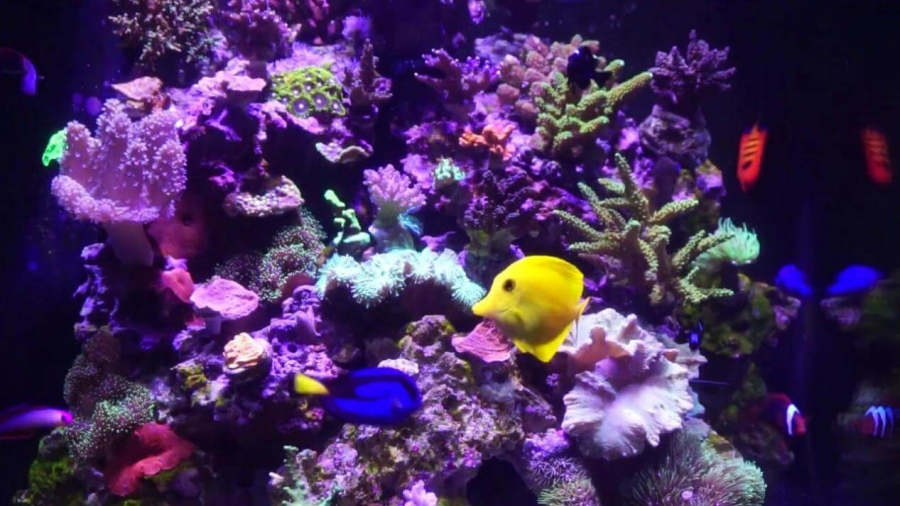 All You Need To Know About Difference Between LPS And SPS Corals